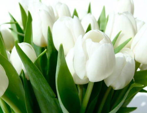 Funeral y Misa Aniversario en Sotogrande