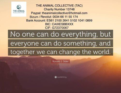 The Animal Collective – Acabemos con el maltrato animal